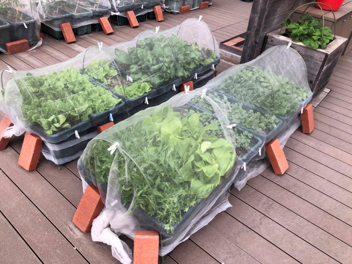 あべのハルカスファームさんから、お野菜の寄付が!!