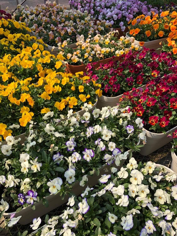 大阪市市内の花農家さんの新たなチャレンジ、計画中!